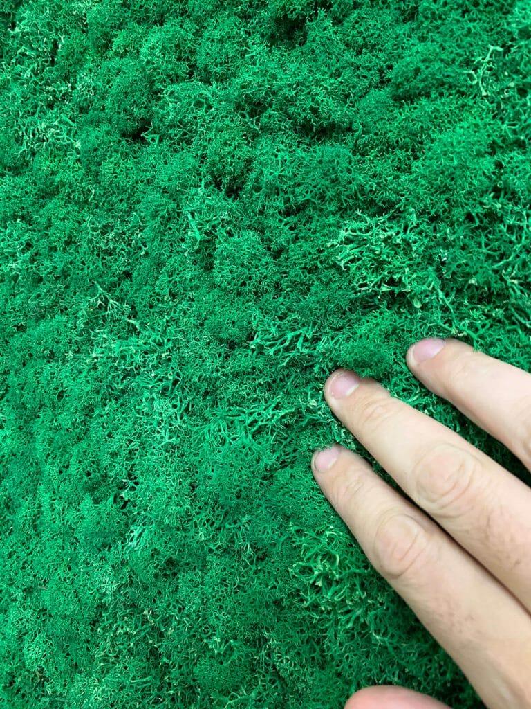 Licheni stabilizzati verdi
