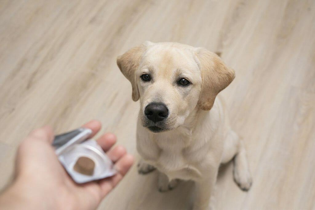 Etichette per integratori animali: una guida per le aziende del pet food